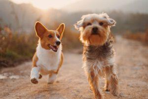 Read more about the article האם כדאי לרכוש בחנות חיות וירטואלית או פיזית?